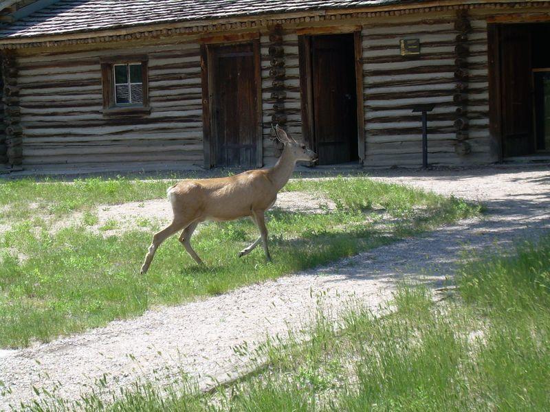 Lyssa Wyoming Vacation 4 008
