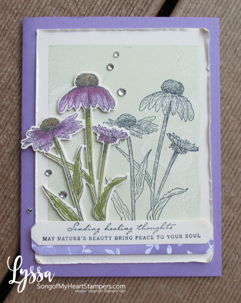 COTM Lyssa Natures Harvest rubber stamp coneflower Stampin Up meadow